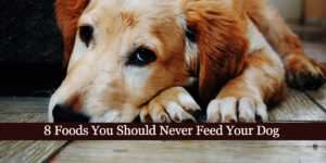 8 Foods You Should Never Feed Your Dog